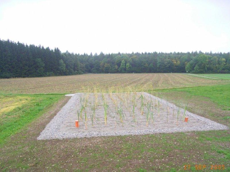 Kleinkläranlage mit Pflanzenbeet: Planung, Gutachten und Bauabnahme